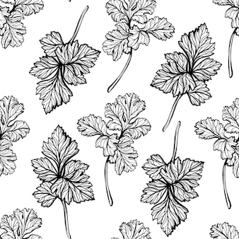 Parsley pattern aromatic spice healthy herbs handdrawn vector illustration