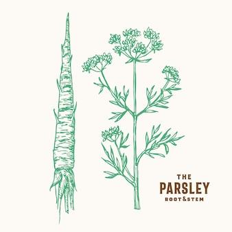 パセリの根と茎のサイン
