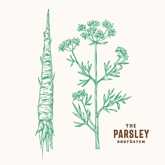 Parsley root and stem sign