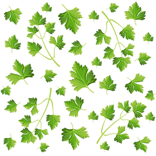 Parsley  on white photo-realistic  illustration  element in culinary, cooking ingredient, package decoration, sticker, label.