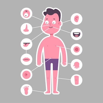 Part of body: nose, leg, eye, ear, arm, mouth, foot, tongue, navel, lips, knee. boy in underwear  cartoon character isolated on background.