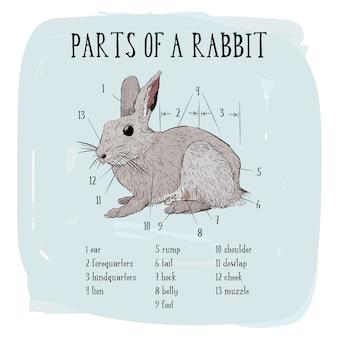 ウサギの一部。ウサギの彫刻のベクトル図。