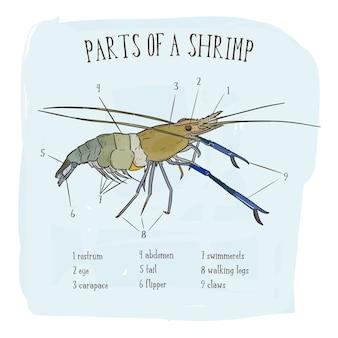 Part of shrimp
