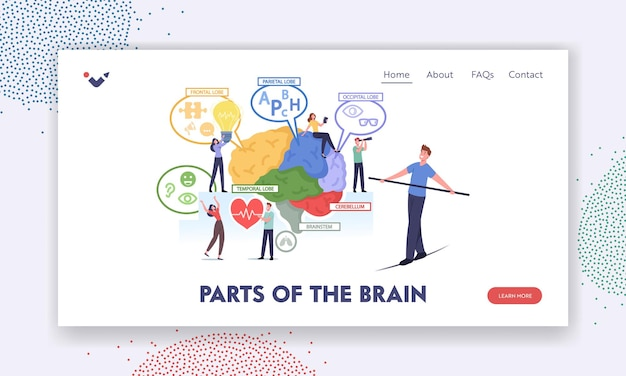 Parts of the brain landing page template. tiny characters at huge human brain separated on frontal, parietal, occipital, temporal lobes, cerebellum, brainstem chart. cartoon people vector illustration