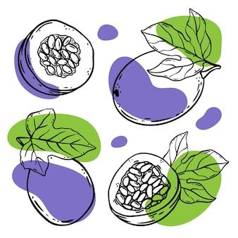 열정 과일 맛 있는 섬세 한 전체 및 스케치 스타일 벡터 일러스트 레이 션 세트에서 유기농 천연 제품 상점 및 디저트 음료의 디자인을 위한 잎 조각