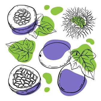 パッションフルーツセットおいしいディリカシー全体と葉のスライス有機天然物ショップとデザートドリンクのスケッチスタイルのベクトル図