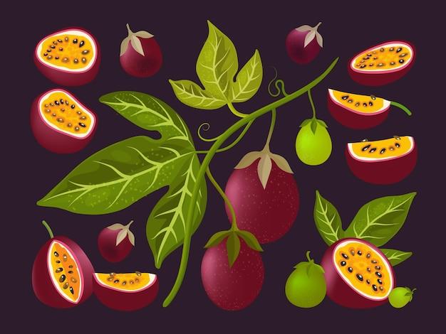 열정 과일. 잘 익은 열 대 과일 절반 및 조각 집합입니다.