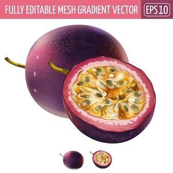 Passionfruit illustration on white