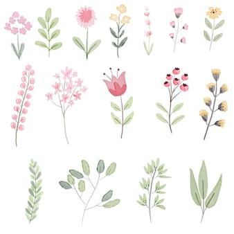 Pastel watercolor botanical drawing
