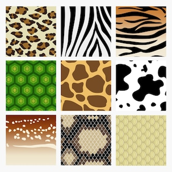 Pattern collection of animal skin. including snake, deer tiger turtle giraffe cow zebra leopard.