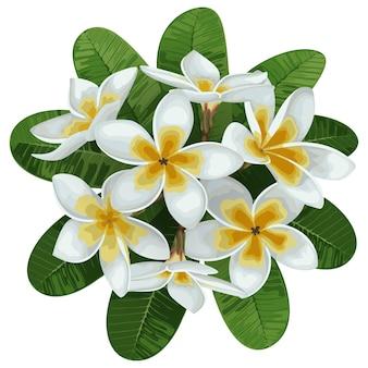 Узор из тропических цветов плюмерии и листьев тропической цветочной композиции на белом фоне