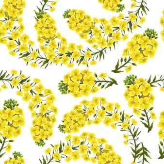 패턴 유채 꽃, 카놀라. 브라 시카 나 푸스.