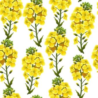 패턴 유채 꽃과 잎, 카놀라.