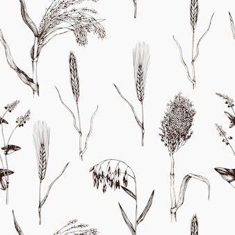 Pattern with hand drawn cereal crops. agricultural plant background