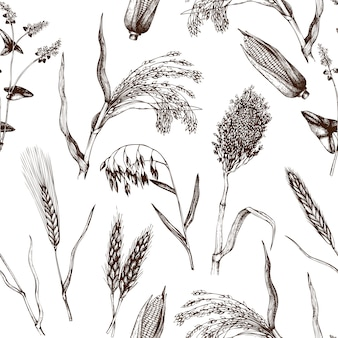Pattern with hand drawn cereal crops. botanical background.