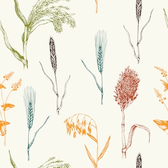 Pattern with hand drawn cereal crops. hand sketched agricultural plants background