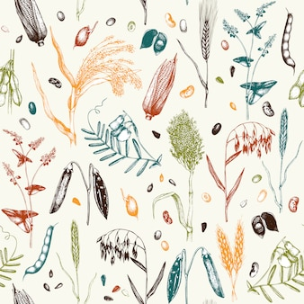 Pattern with hand drawn cereal crops and legume plants in color