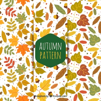 Patterns with leaves for autumn
