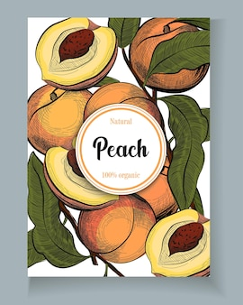 Peach in engraving vintage style vector isolated illustration in sketch style template