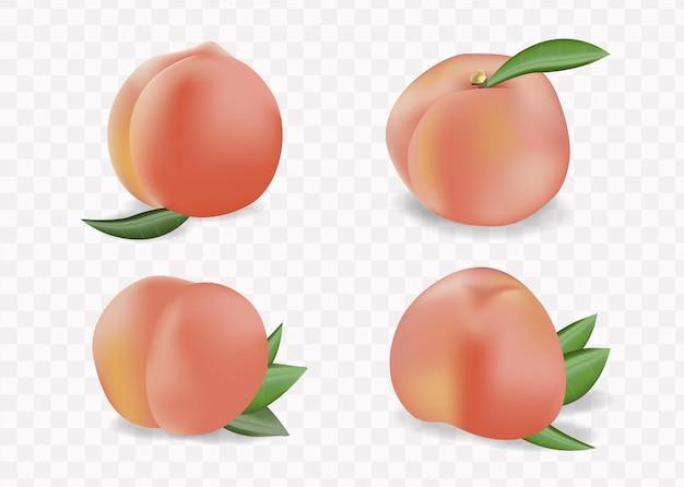 복숭아 과일 요소 집합입니다. 과일, 잎의 고립 된 복숭아 컬렉션,