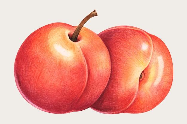 色鉛筆で描かれた桃の手