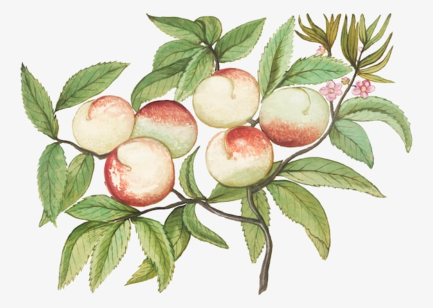 Персики в винтажном стиле