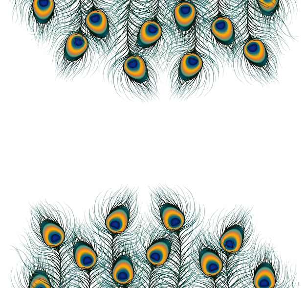 free peacock feather vector images free peacock feather vector images