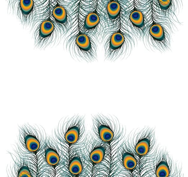 隔離された背景に孔雀の羽