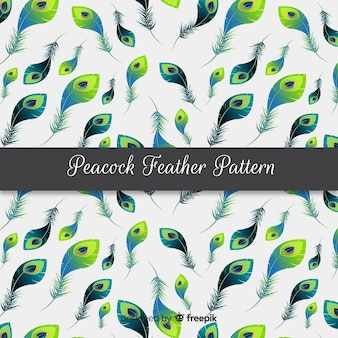Peacock feather pattern collection with realistic design