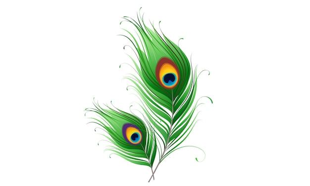白の孔雀の羽