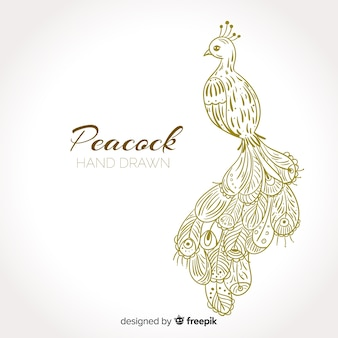 Peacock in hand drawn style