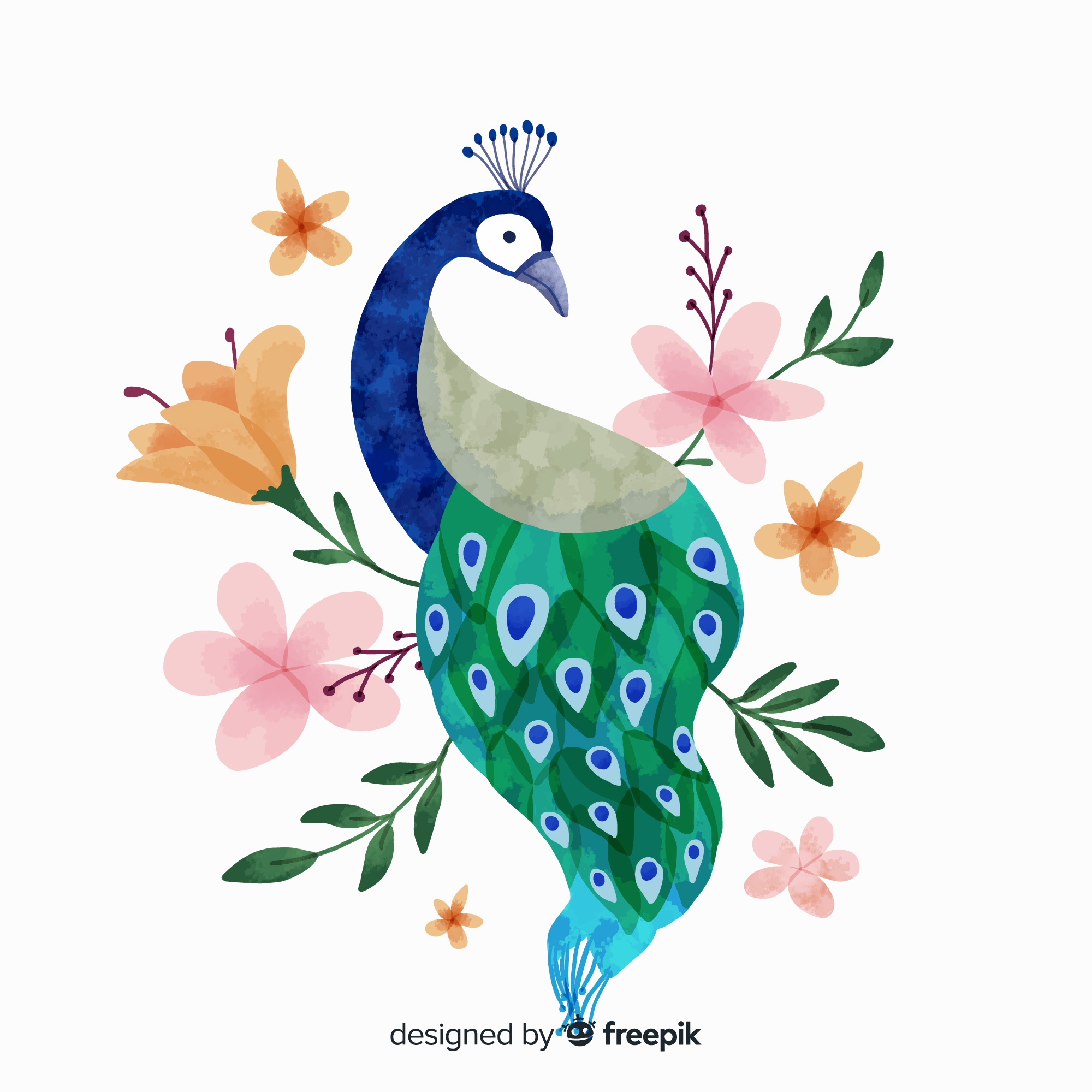 Peacock in watercolor style
