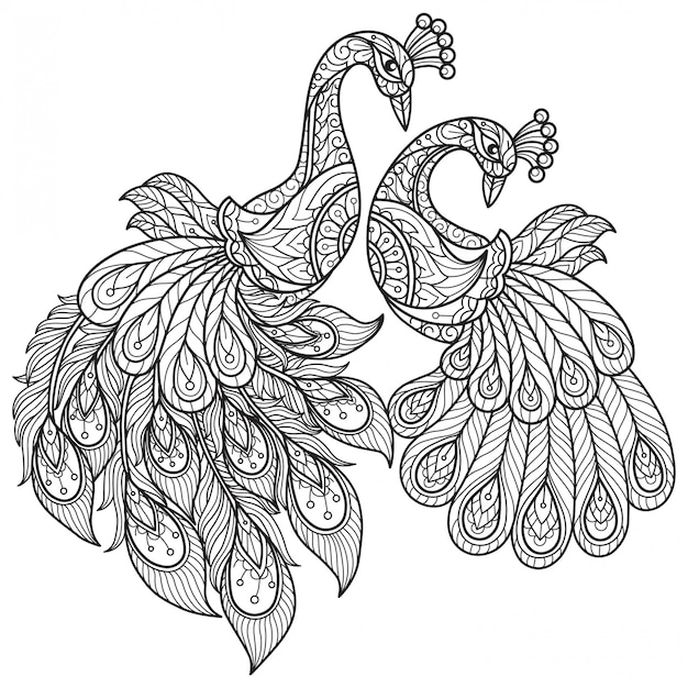 Peacock lovers. hand drawn sketch illustration for adult coloring book