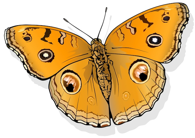 Павлиньи анютины глазки butterfly junionia almana