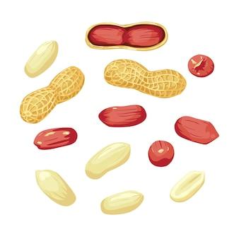 Семена арахисового ореха целые и очищенные, сбор арахиса. органический пищевой ингредиент, традиционные закуски. белый фон
