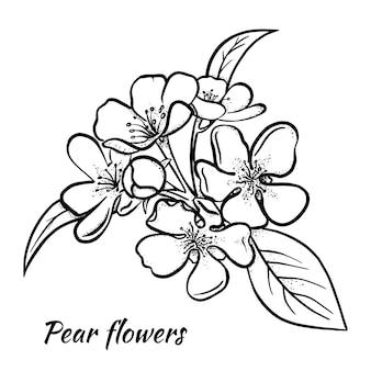梨の花のスケッチ。手作り。線形イラスト。白い背景で隔離。ベクター。