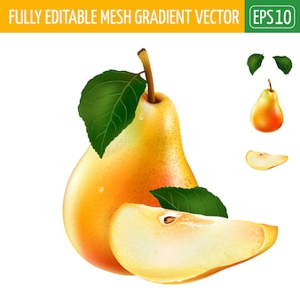 Pear illustration on white
