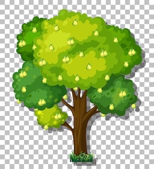 透明な背景に梨の木