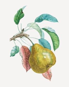 アンリ=ルイ・デュアメル・デュ・モンソーのアートワークからリミックスされた、葉のアートプリントが施された洋ナシのベクトル