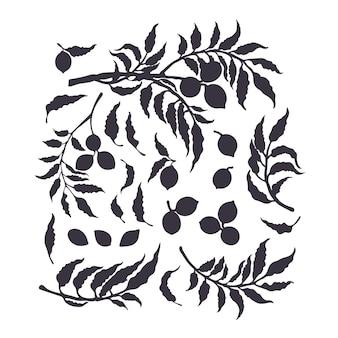 피칸 실루엣 세트. 자연 나무, 가지, 견과류, 잎 절연. 단색화