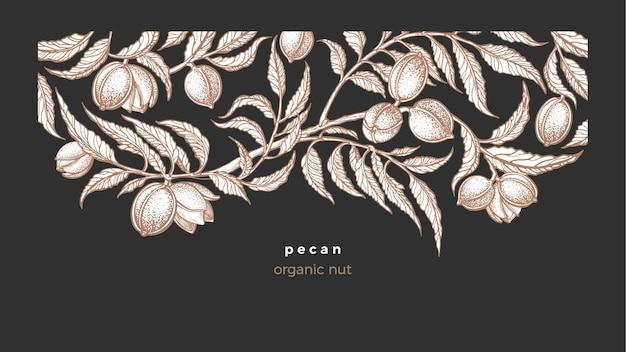 피칸 템플릿. 손으로 그린 식물, 견과류, 단풍. 식물 그래픽 일러스트