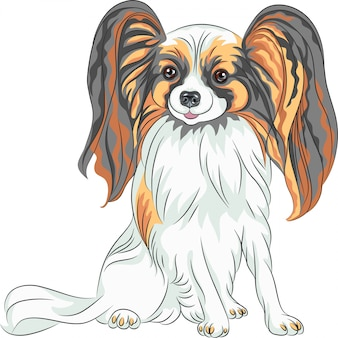 Pedigreed dog papillon breed