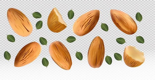 Очищенный миндаль. реалистичные орехи с листьями