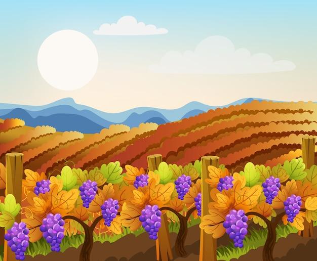 Писаж пустых и заполненных виноградными деревьями полей