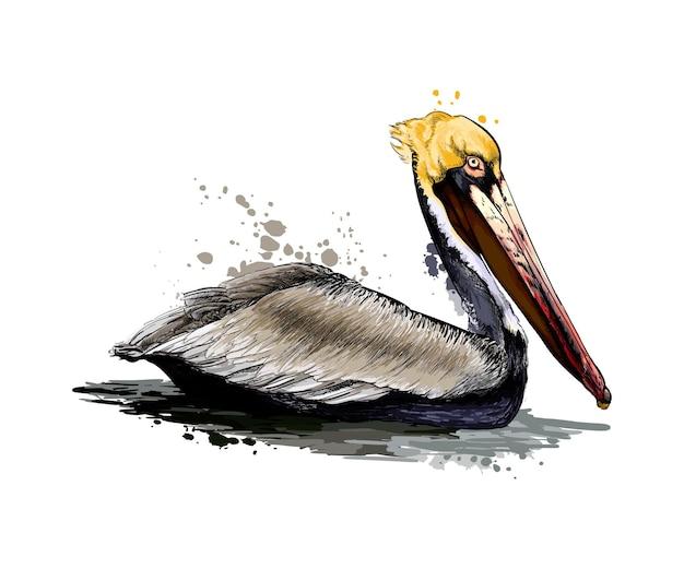 Пеликан из всплеск акварели, рисунок цветной, реалистичный. векторная иллюстрация красок
