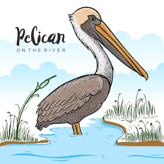 Pelicans on river