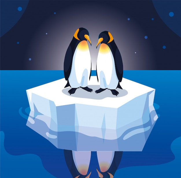Penguin couple on an ice floe drifting
