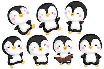 Penguin Image Set