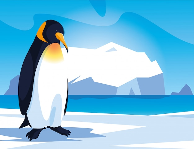 Penguin at the north pole, arctic landscape