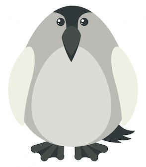 Penguin with gray color